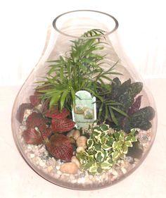Our Glass Teardrop Terrarium.
