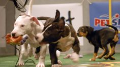 You can draft a #fantasyfootball team for the #PuppyBowl!