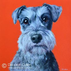 """DOG PORTRAIT Mr Bentley – Miniature Schnauzer Acrylic on Canvas, x x Private Commission, Mathew (Alexandria, NSW) Mr Bentley is a 5 year old black and silver Miniature Schnauzer. He is """"Complex. Very clingy and loving to family. Miniture Poodle, Miniature Schnauzer, Dog Hotel, Schnauzer Dogs, Dog Portraits, My Animal, Alexandria, Miniatures, Sketches"""