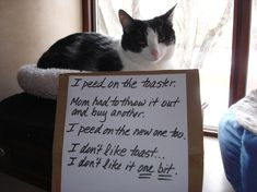 Cat confessions. Not shaming, because unlike dogs, cats don't give a shit!