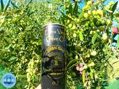 Olive oil from Crete Greece in 2021 summer A Hundred Years, Old Trees, Crete Greece, Olympus Digital Camera, Air Pollution, Shrubs, Health Benefits, Whiskey Bottle, Olive Oil