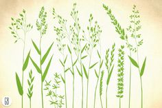 Wild herbs, hair grass, wheat - Illustrations - 1