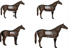 Horse Therapy, Trigger Points, Massage, Rice, Muscle, Healing, Cold, Paint, Design