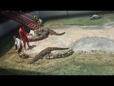 thailand Crocodile man in Crocodile JAWS
