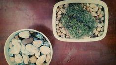 Mini tree Beans, Vegetables, Mini, Garden, Food, Beans Recipes, Veggies, Lawn And Garden, Vegetable Recipes