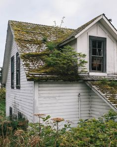 cabinporn:Budding roof forest in Sitka, Alaska by Peter Baker.