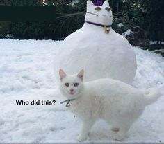 The unamused cat: | 28 Pictures That Will Make You Laugh Every Time