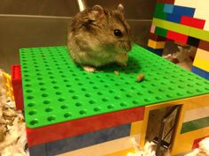 Lego hamster hideout