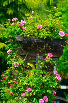 Claude Monet Garden Visit Giverny01
