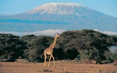 Tanzania and the Great East African Migration - would love to do this trip!
