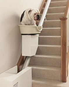 Salvaescaleras para perros