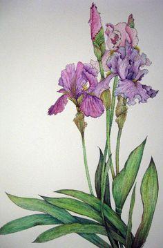 Фиолетовый Ирис по AriadnesThread55 на Etsy