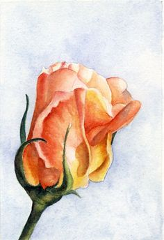 One of my very favorite colors... Rose, Original 4 x 6 Watercolor by Madelaine Fedorowich