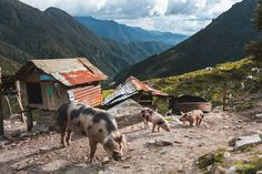 Hiking in Los Nevados National Park: Best Trek in Colombia — LAIDBACK TRIP South American Countries, Hiking Guide, Natural Park, Day Hike, Us Travel, Trekking, Countryside, Paths, National Parks