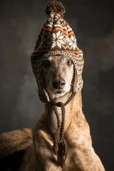 I want this hat for Phyllis the greyhound!!