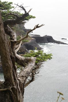 Oswald West State Park offers breathtaking views of Oregon's coastline.