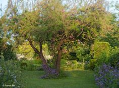 Veilchenblau jardin roses