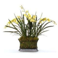 Cymbidium orchids in wire basket