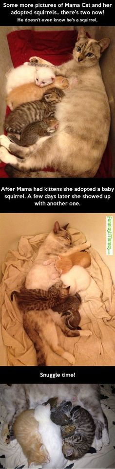Momma Kitty takes in Baby Squirrels! ~Laurie~