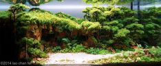 Post with 3391 votes and 194797 views. These are aquariums. This is the art of a aquascaping. Aquascaping, Aquarium Aquascape, Planted Aquarium, Aquarium Landscape, Aquarium Fish Tank, Aquarium Ideas, Cool Fish Tanks, Japan Garden, Pet Fish