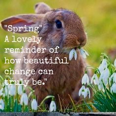 Spring a lovely reminder of how beautiful change can be All Quotes, Motivational Quotes For Life, Best Quotes, Inspirational Quotes, Cheesecake Cups, Personal Growth Quotes, Spring Quotes, Mini Eggs, Why Do People