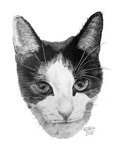 This cat pencil portrait, Whisky was commissioned to celebrate its owners love of cats, particularly his lovley tuxedo. Do you fancy a cat pencil portrait.