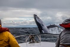 When Is the Best Time of Year for Whale Watching Boat Tours in Skagway, AK? Whale Watching Boat, Grands Lacs, Sports Nautiques, Water Sports, Attraction, Save The Whales, Big Island Hawaii, Humpback Whale, Quebec City