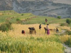 Women agricultural workers in Mugu district, of beautiful Nepal, May 2013.  Many women in Nepal carry a painful burden that they are too embarrassed to talk about. They live with it for years, in some cases because they don't know where to go for help. They are living with uterine prolapse, a debilitating condition in which the pelvic muscles give way, allowing the uterus to descend into the vagina.