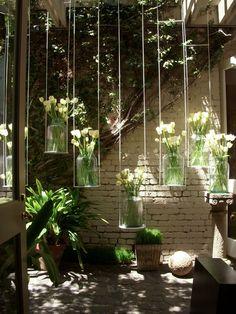 Future garden. Hanging Tulips..