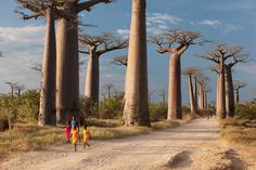 A group of young girls walk through Avenue of the Baobabs, near Morondava, Madagascar - Cultura RM Exclusive/Philip Lee Harvey