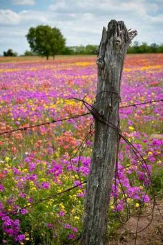 the contrast between the soft colourful flowers and the rusty barbed wire is strong, love it.