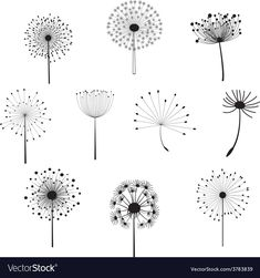 Find Floral Elements for design, dandelions. Vector illustration Stock Images in HD and millions of other royalty-free stock photos, illustrations, and vectors in the Shutterstock collection. Dandelion Drawing, Watercolor Dandelion Tattoo, Dandelion Clock, Flower Doodles, Doodle Drawings, Clipart, Painted Rocks, Art Sketches, Flower Art
