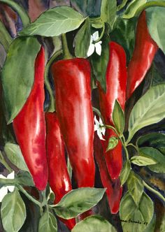 Red Chili Peppers Painting  - Red Chili Peppers Fine Art Print