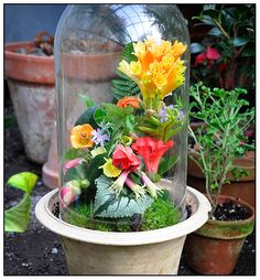 Glass Domes For Plants - Yahoo Image Search Results