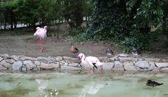 Parque Zoológico da Maia. Flamingo, Animals, Zoo Park, Flamingo Bird, Animales, Animaux, Flamingos, Animal Memes, Greater Flamingo