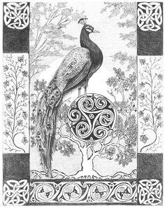 """""""Peacock"""" by Gloria Pischke"""