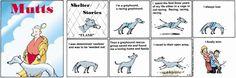 Greyhounds are AMAZING!