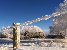 Hoar Frost Park County, Wyoming U.S.A.