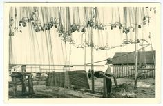 EW-aegne fotopostkaart Käsmu rand kalavõrgud (Võsu) (82082866) - Osta.ee