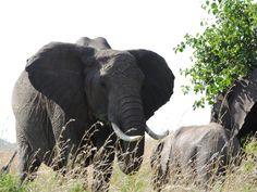 475 Best African Home Adventure Safaris Mount Kenya Affordable