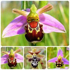 collage de orquidea abeja