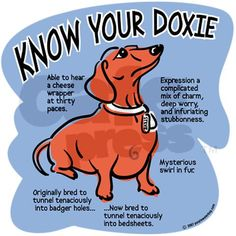 Know your dachshund Greeting Card