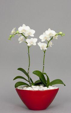 More flower arrangement ideas