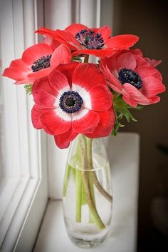 Flores para o meu deleite