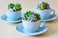 Decore a cozinha com suculentas em xícaras! | Vídeos e Receitas de Sobremesas
