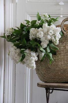 In the foyer - wicker bag & White lilacs