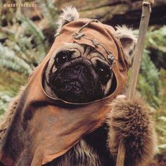 Figure out more info on pug dogs. Visit our internet site.