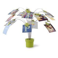 写真が咲く鉢植え「umbra ペタルフォトクリップ」