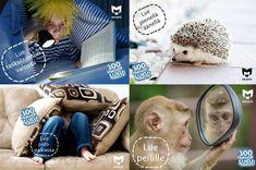 Celine, Teddy Bear, Toys, Animals, Activity Toys, Animales, Animaux, Toy, Teddy Bears