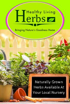 Naturally grown Herbs available at your Local Nursery